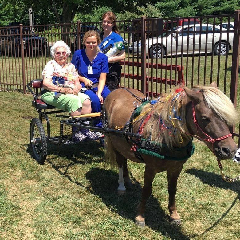 Senior petting horse