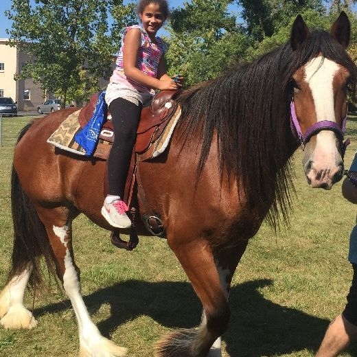 Clydesdale back rides, chambelrin pony rides