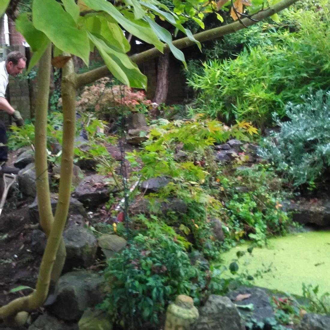 Rock Garden Surrey  Winter gardening