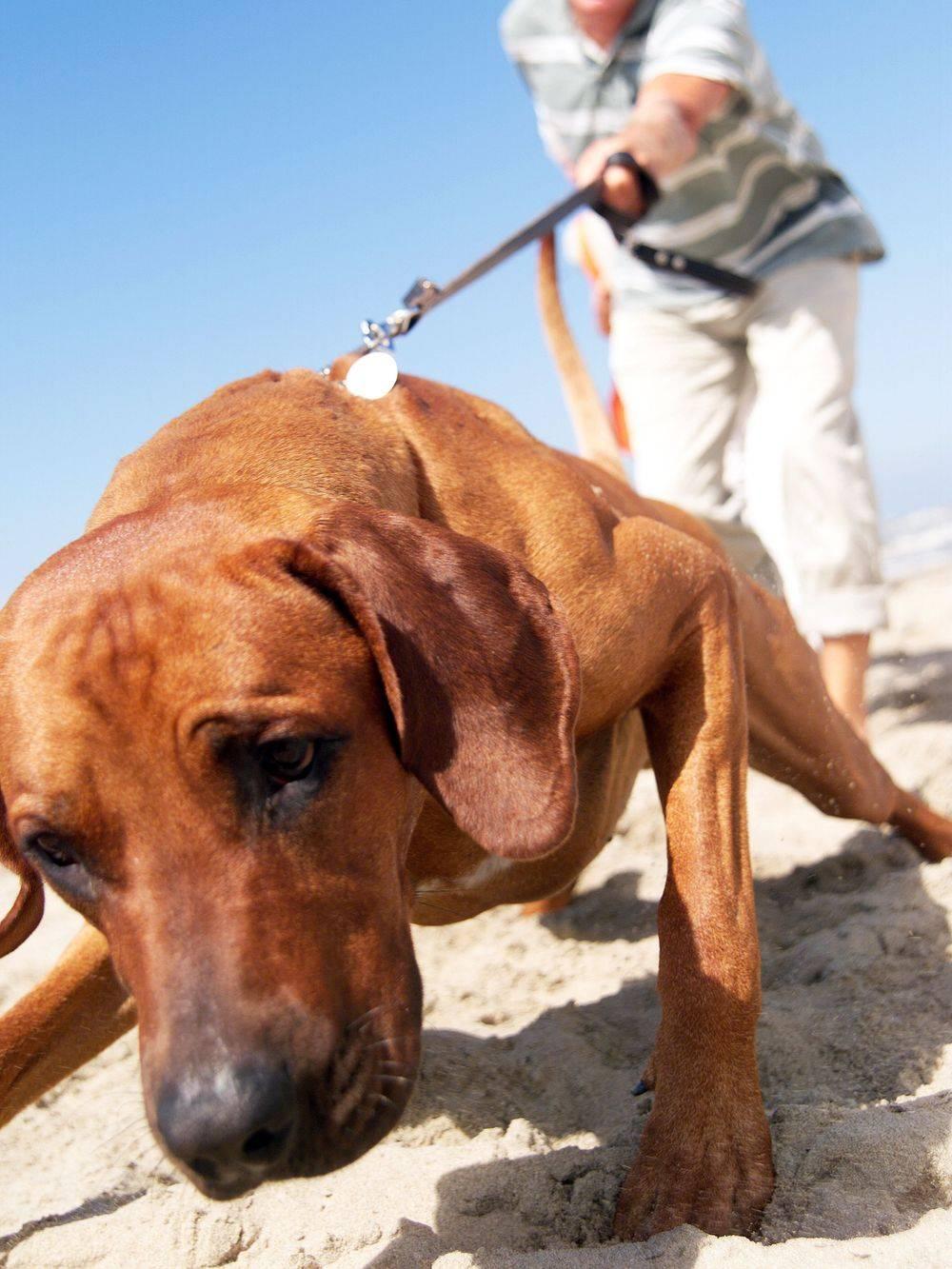 Hondencursus Sint-Oedenrode