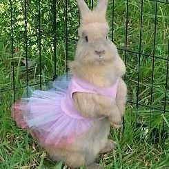 Bunny rabbit dressed in a tutu