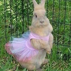 Bunny rabbit dressed in a tutu