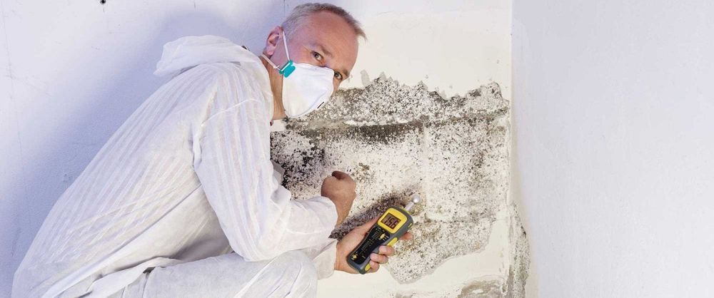 Black Mold Inspection Fremont CA