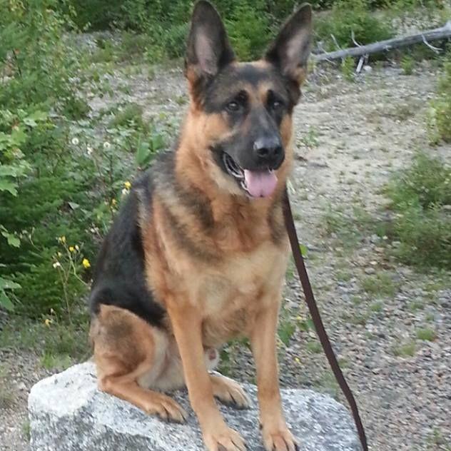 dog training, tantallon, halifax, nova scotia