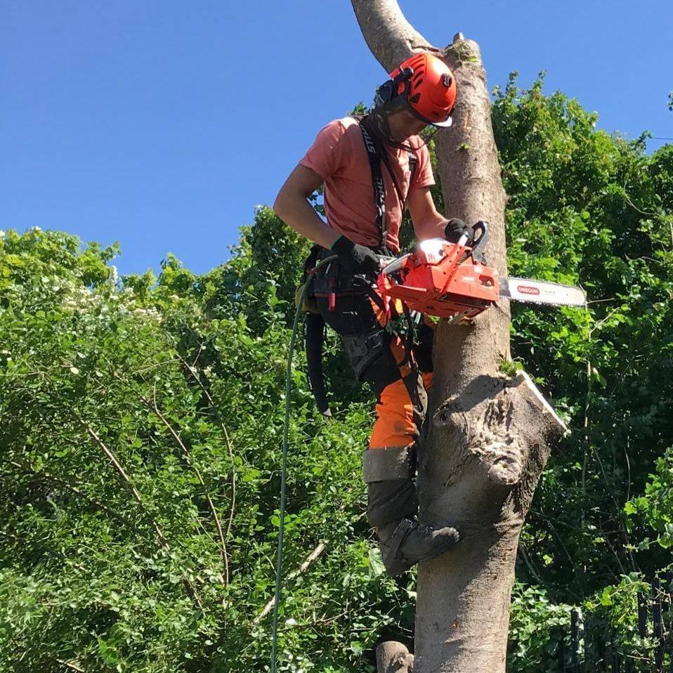 Tree Pruning Barnstaple