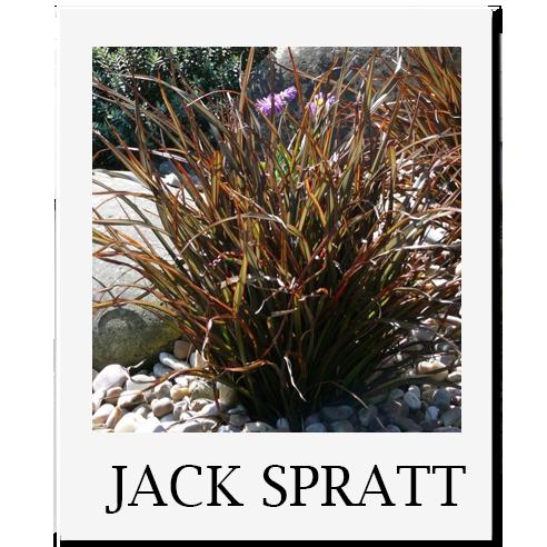 JACK SPRATT Plant Nursery Sacramento