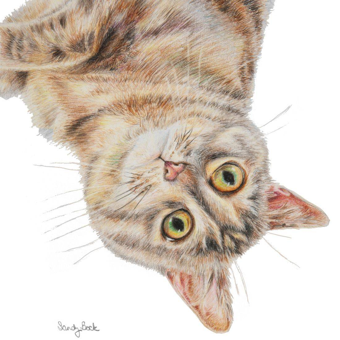 cat pet portrait, cat portrait, cat, pet art, colored pencil