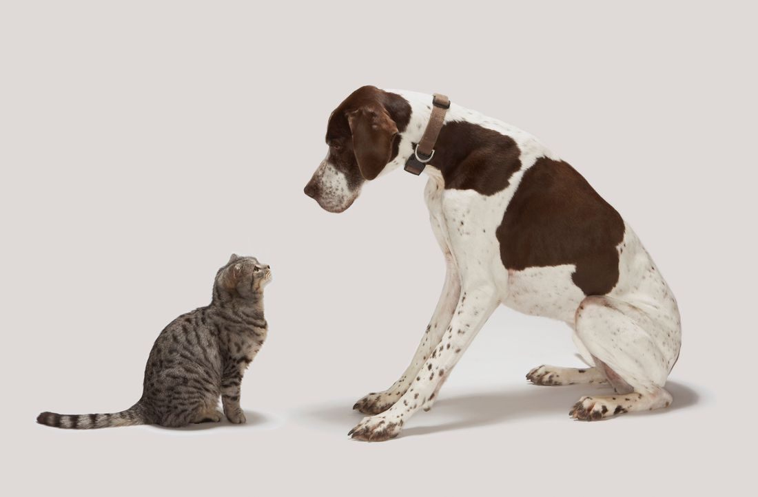 Cat Grooming in Brentwood and Nashville