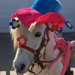 Clown pony