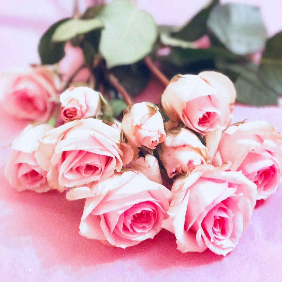 Rose Water Uses Benefits Skincare