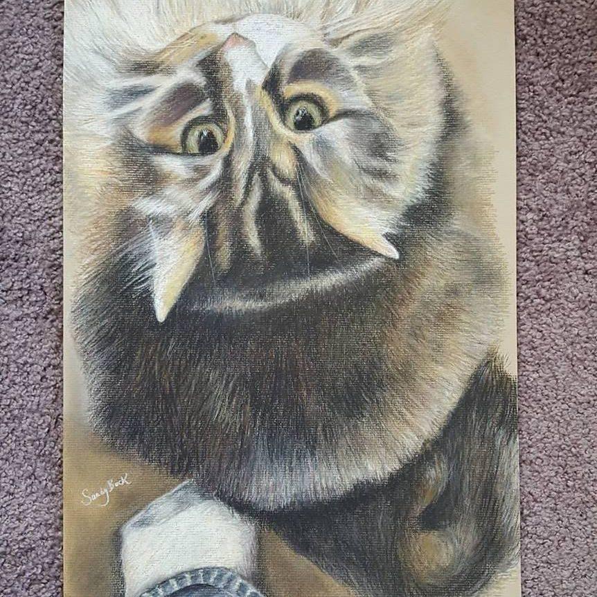 cat, norwegian forest cat, pet, pet portrait