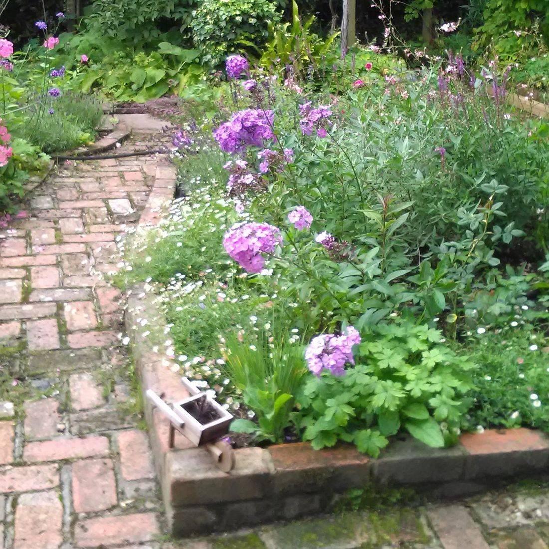 cottage garden Surrey gardens  Summer planting
