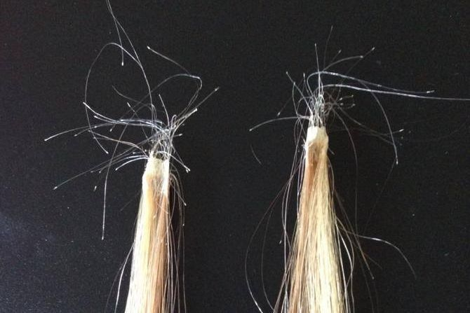 Close up of bonded hair extensions after removal containing  natural shed hair