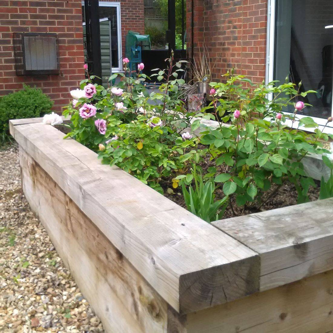 Spring flowers Hampshire gardening roses raised bed