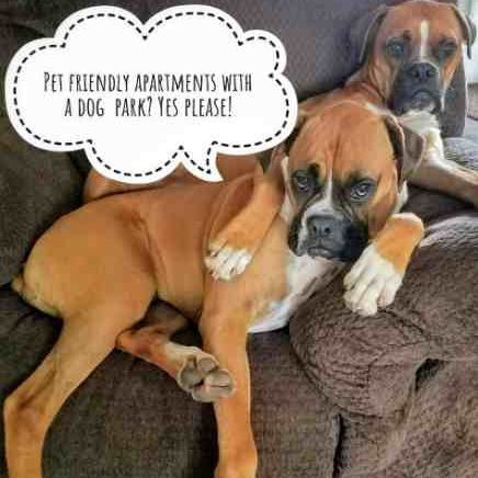 image of 2 boxer dogs, pet friendly apartments with a dog park pet park, yes please! message bubble