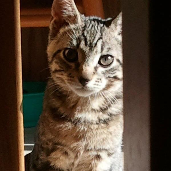 Beautiful Tabby Kitten