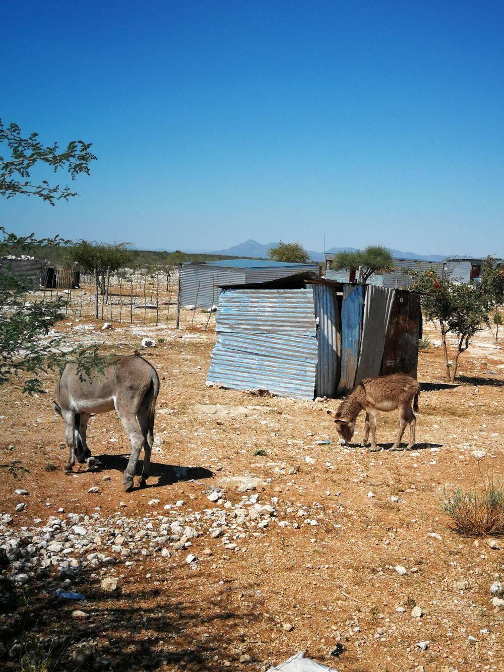Exclusive local tours, Etosha, Etoshapoort, Daytours, Daytours Outjo, Daytours, Namibia, Alfie, Alfie Louw