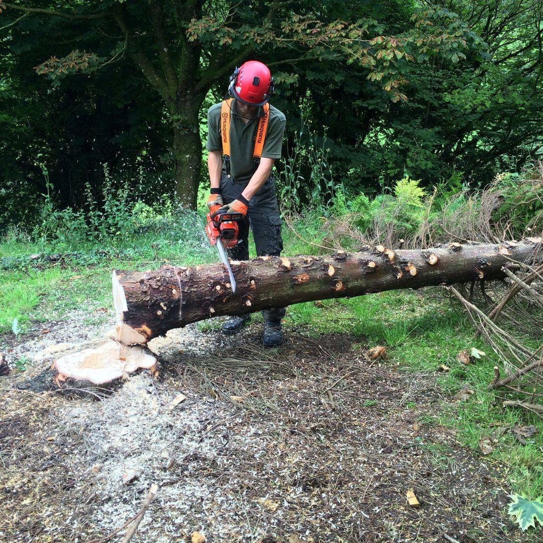 Tree Services Barnstaple