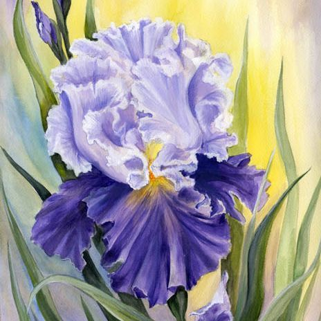 "SBaeckmann - Purple Iris - 11"" x 14""  Watercolors  Matted in Sleeve - $300"