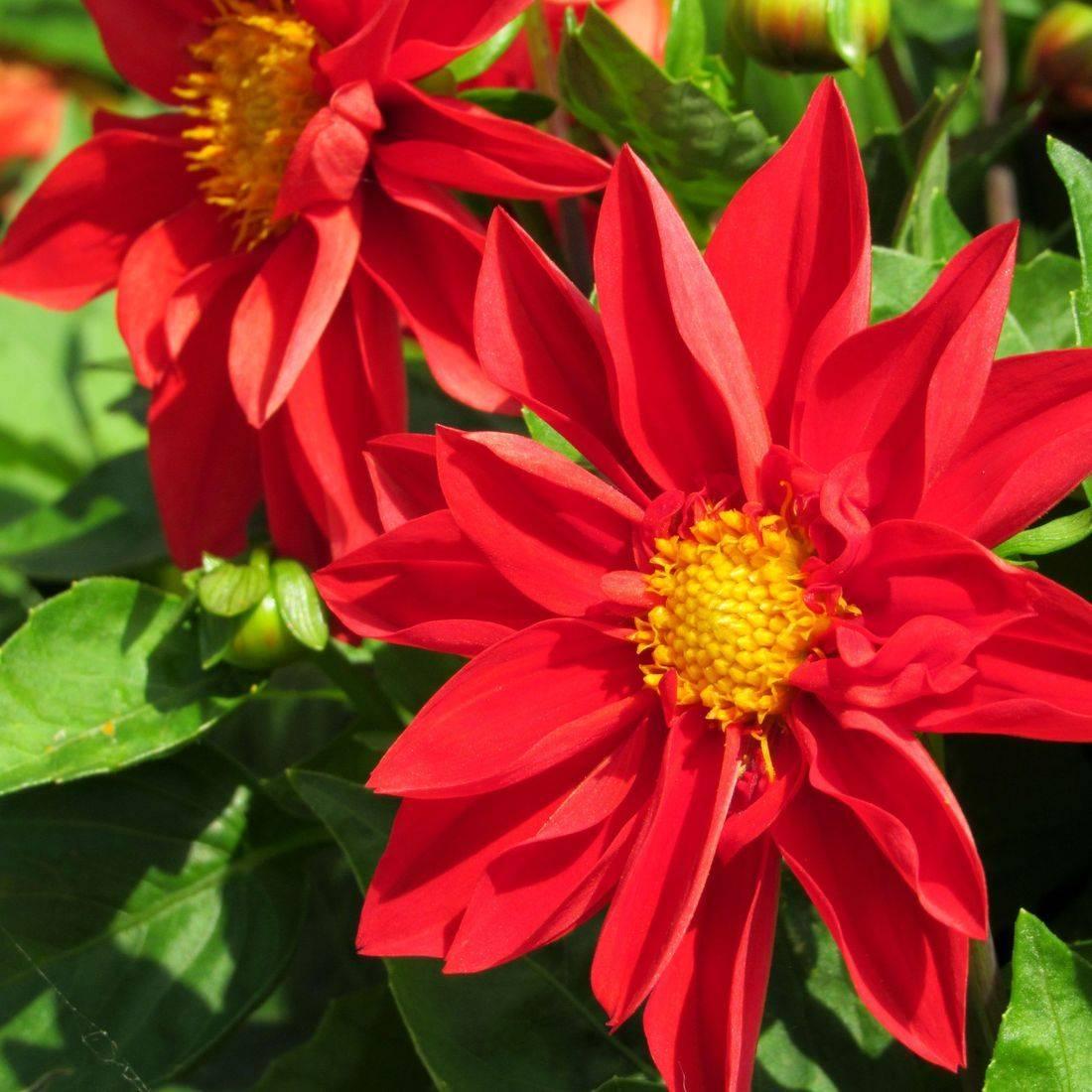 Flowers, Floral, Plants, Garden