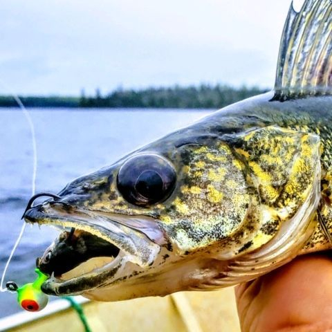 Fishing, Trophy Fishng, Manitoba fishing, family vacations, cabin rentals, boat rentals, canoe route, Nopiming Provincial Park, walleye, swimming