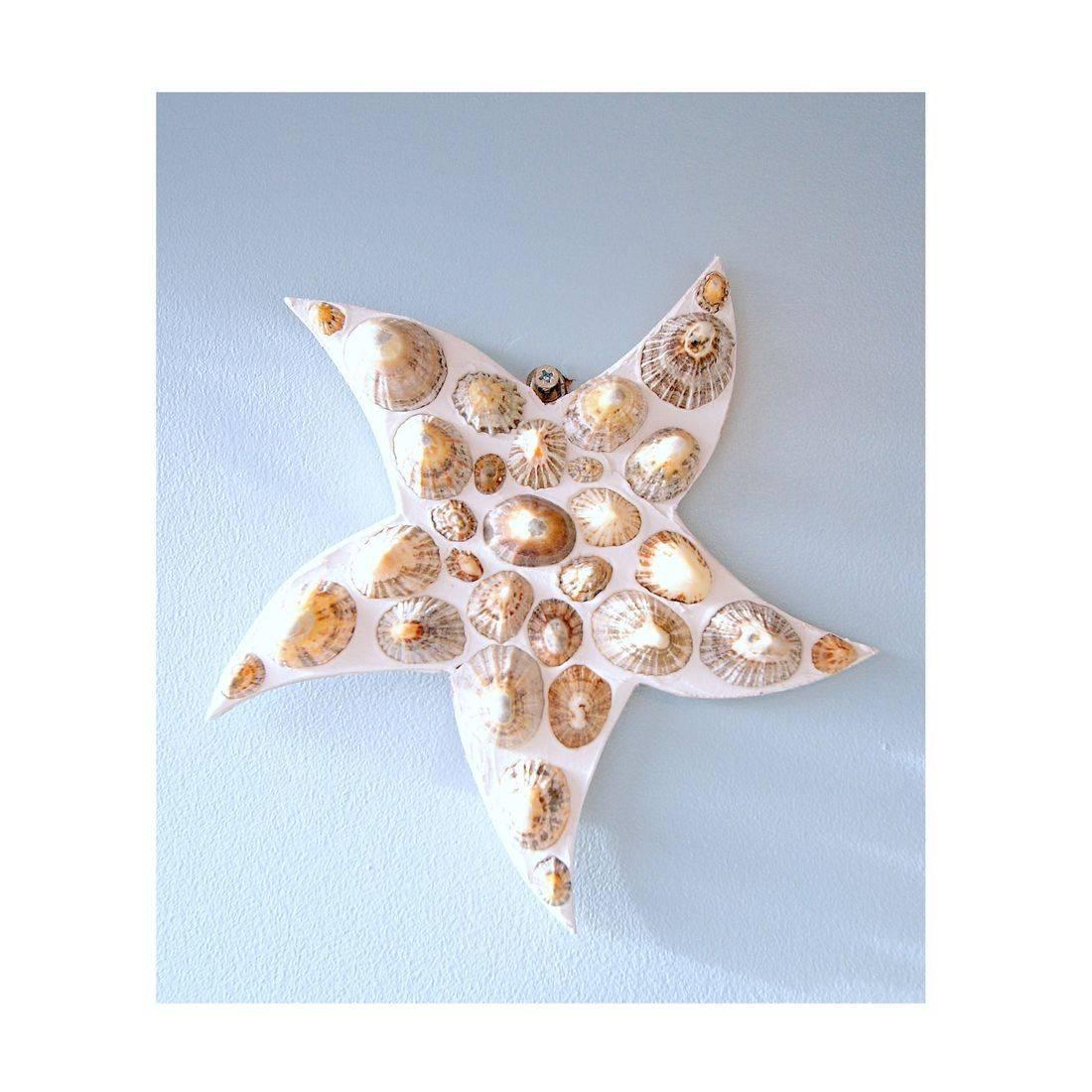 15 Mosaic Shell limpit star fish