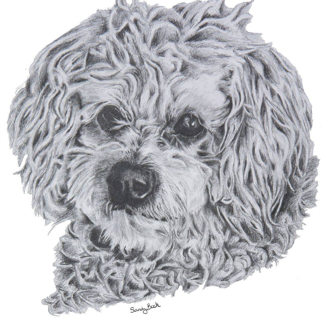 pet portrait, sandy bock logo, pet art, artist