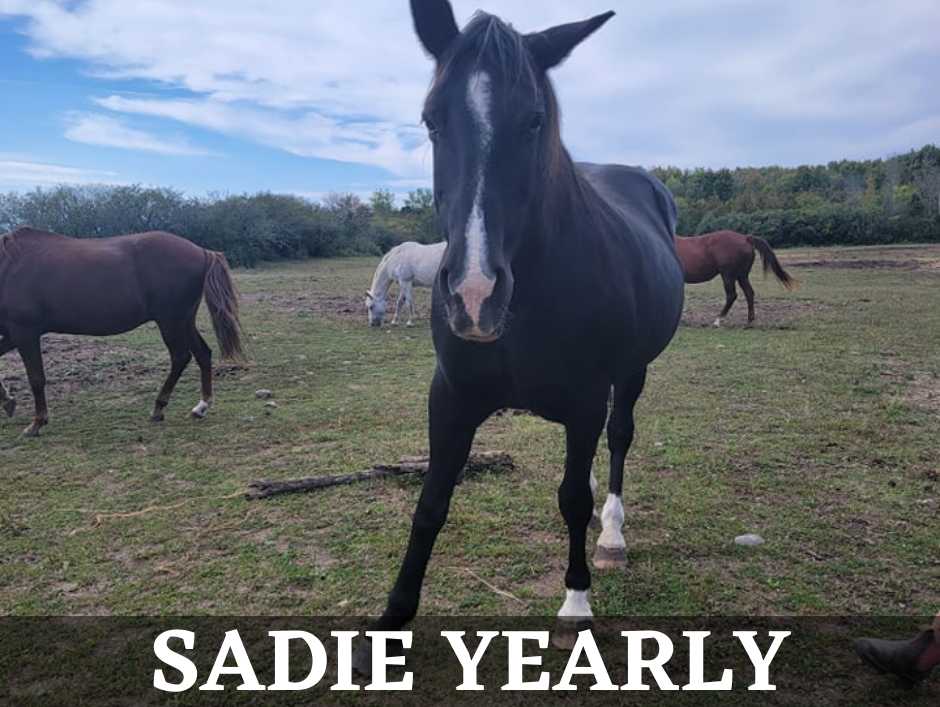 Heal With Horses Equine Therapy Horse Therapy Prince Edward County