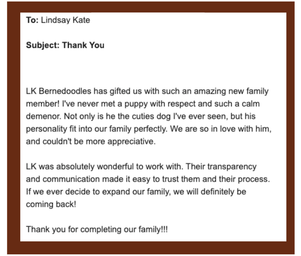 email praising LK Bernedoodles on their puppy's calm demeanor