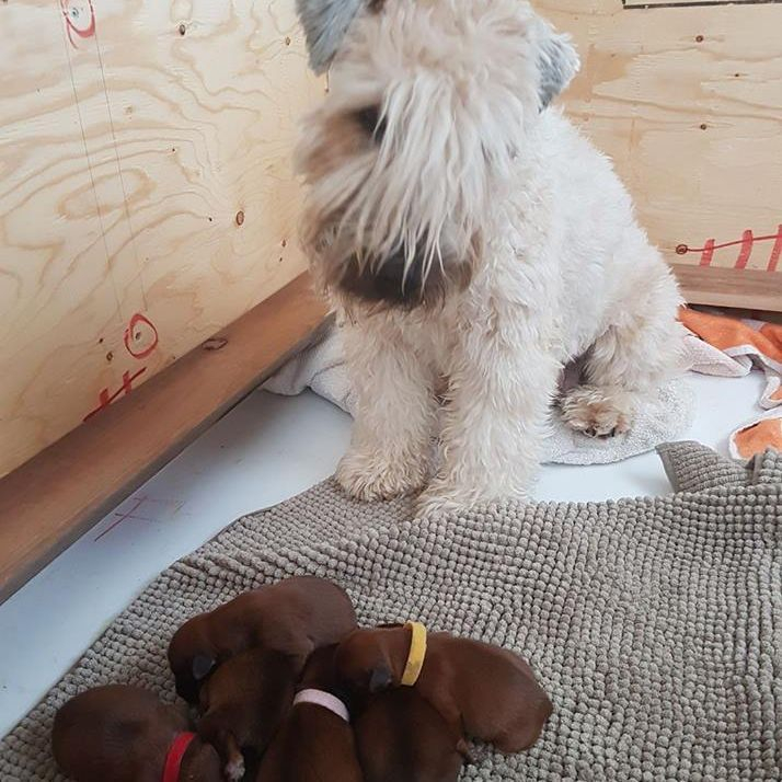 Pepper and her babies