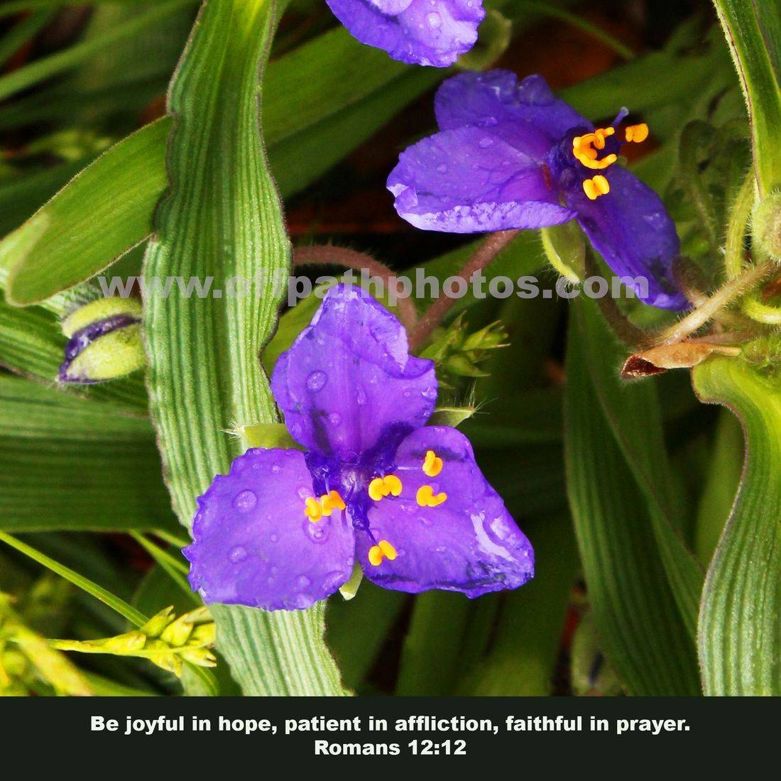 photography for sale, wildflowers, nature, Scripture, Bible, Romans, prayer