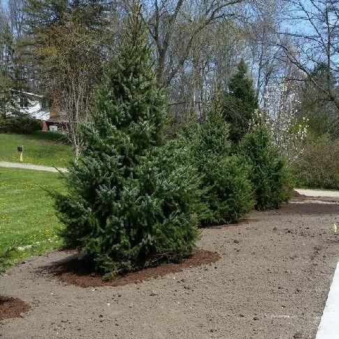 Canton Landscaping Job driveway