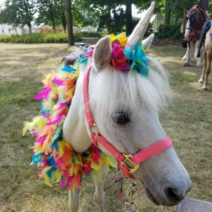 Pony dressed as a unicorn with bright colors around his neck