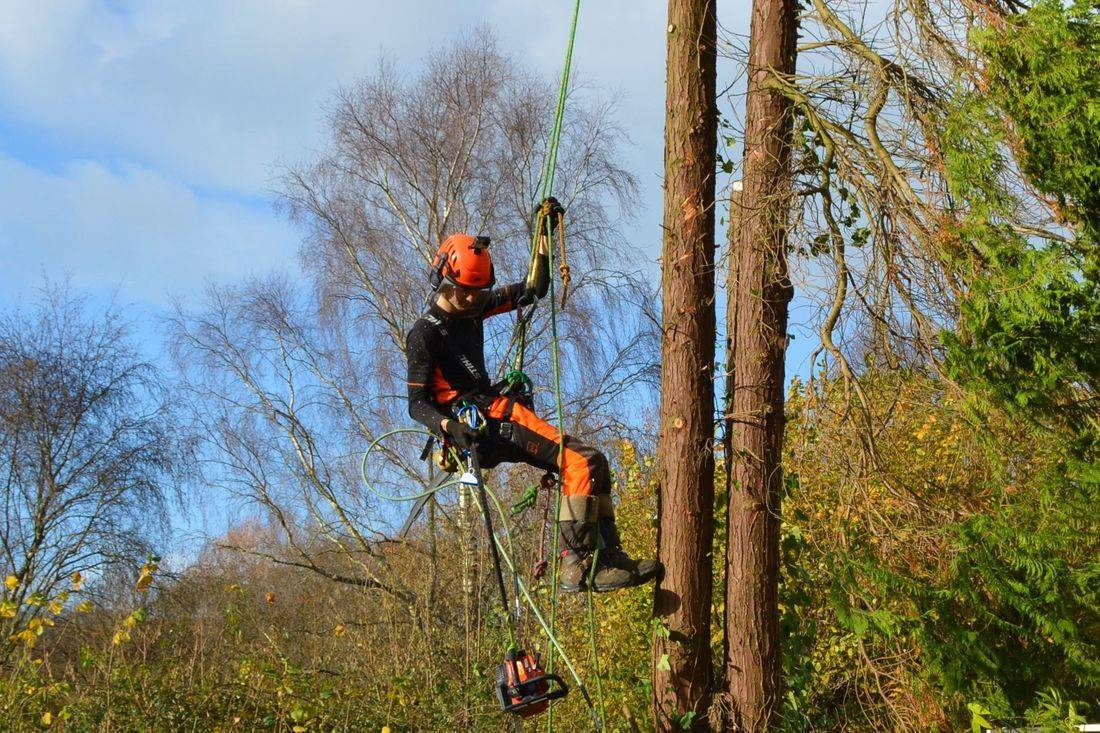 Exmoor Tree Surgery Barnstaple