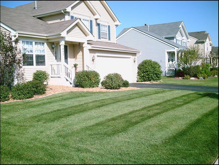 """""""lawn care"""", """"organic fertilizer"""", """"organic weed control"""", """"organic grub control"""""""