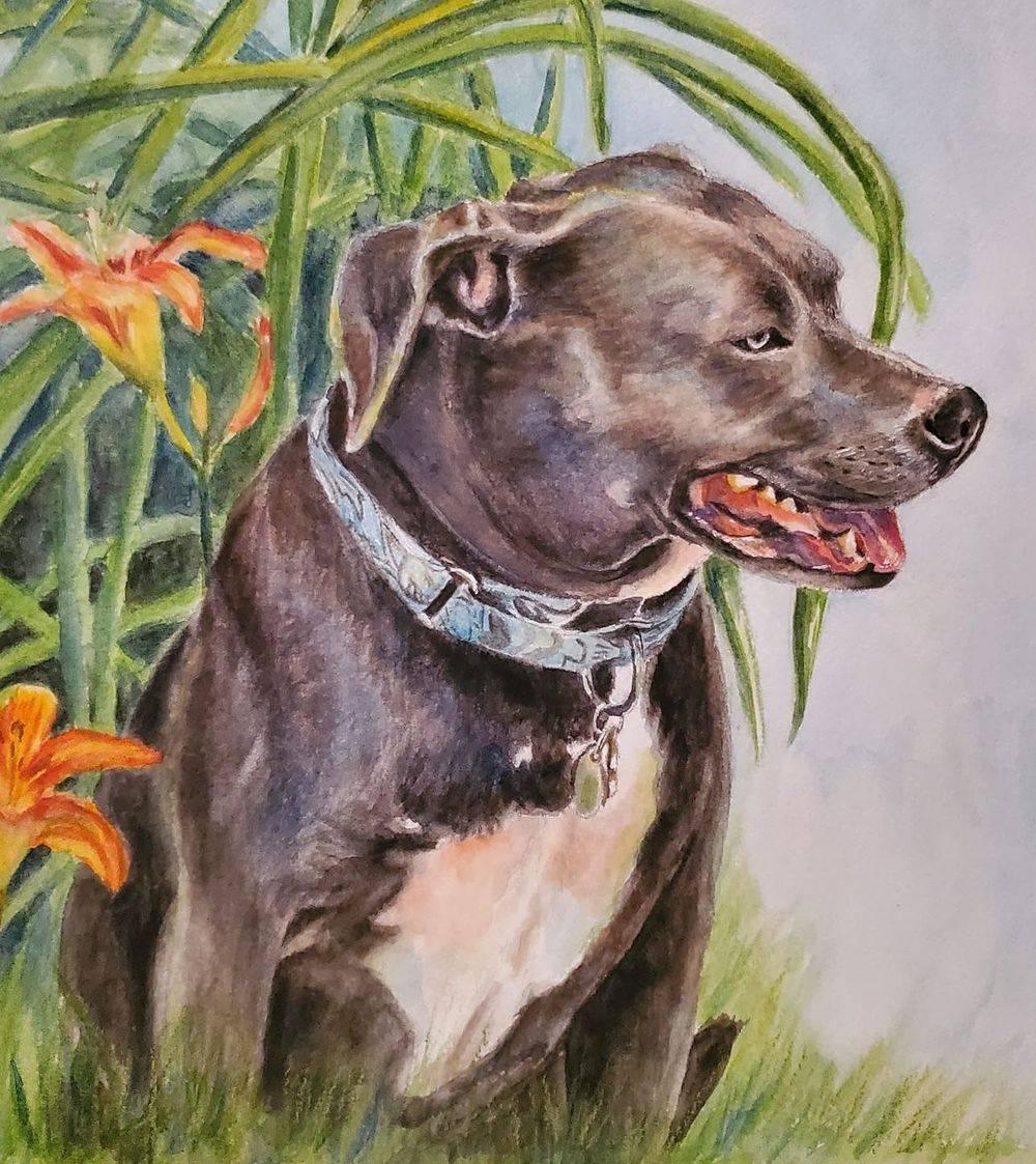 pet portrait, dog portrait, dog art