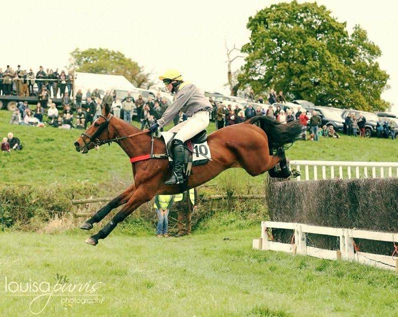 horse and jockey in a race jumping a hurdle