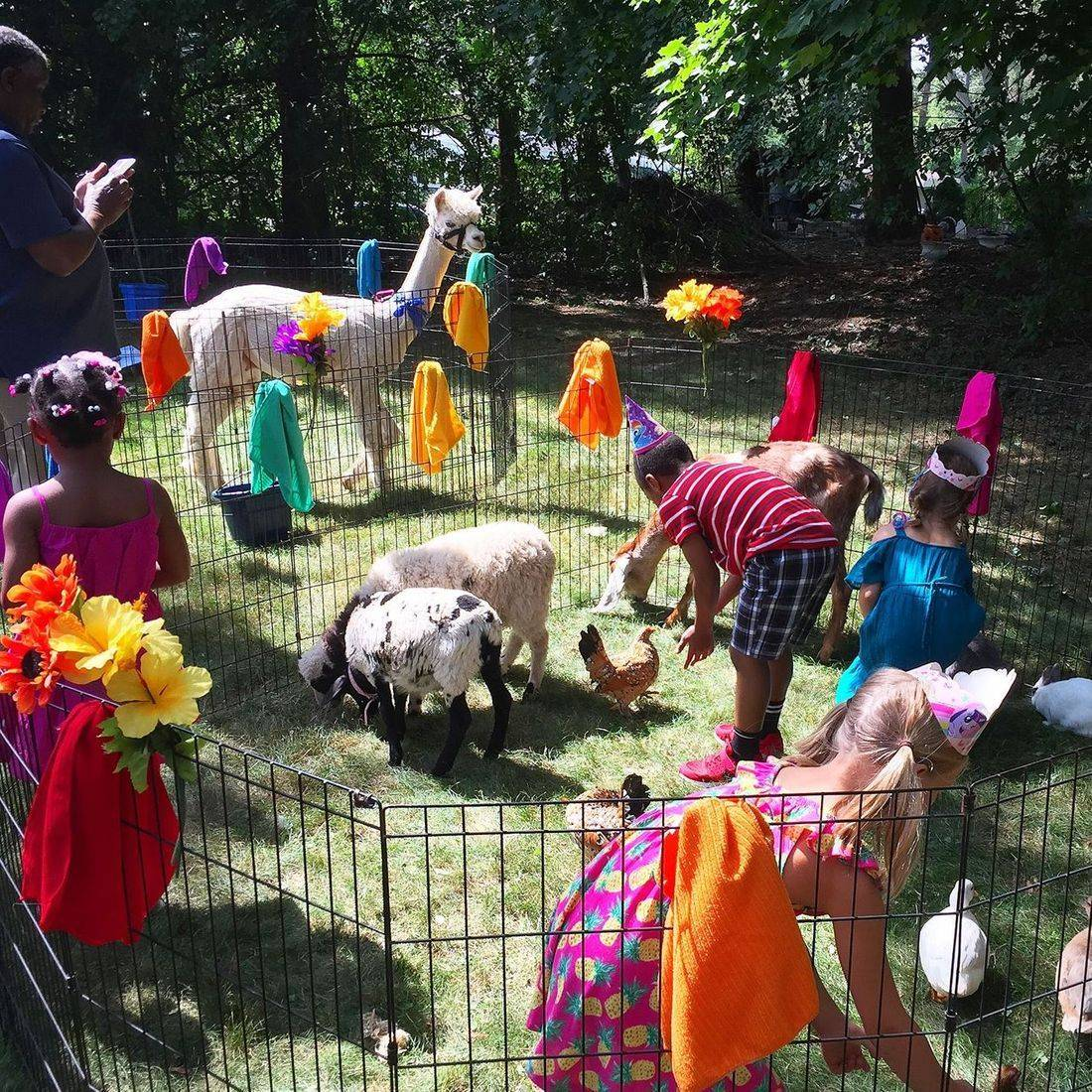 petting zoo with lots of colorful towels hanging on fence