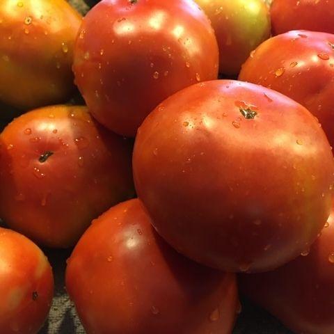 Farm fresh, red tomatoes.