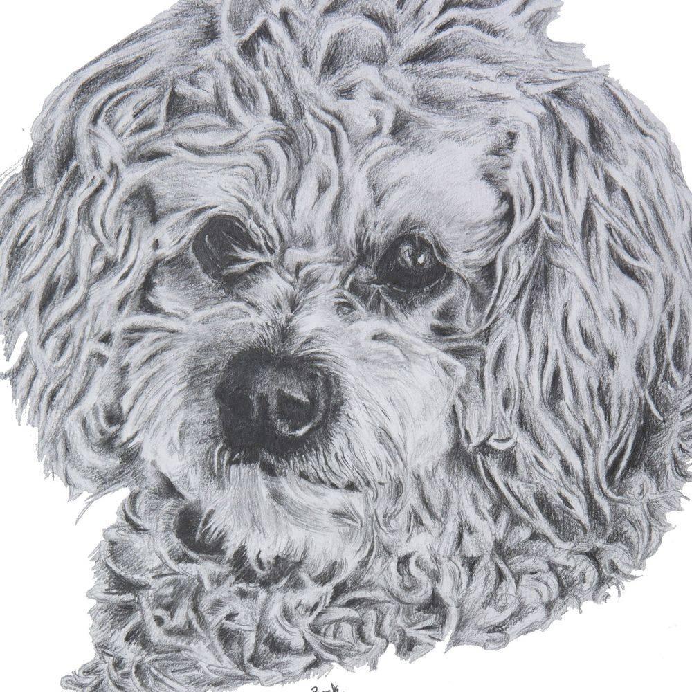 dog, dog portrait, pets, pet portrait, drawing