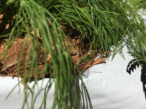 Coco peat growing bags in UAE stock