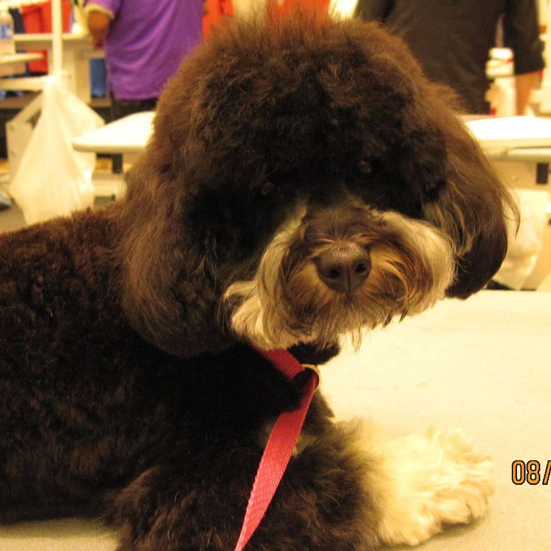 Lisa Jacobson, Dog Grooming, appleton kimberly