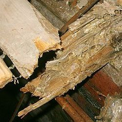 Floor Timbers under fungus attack