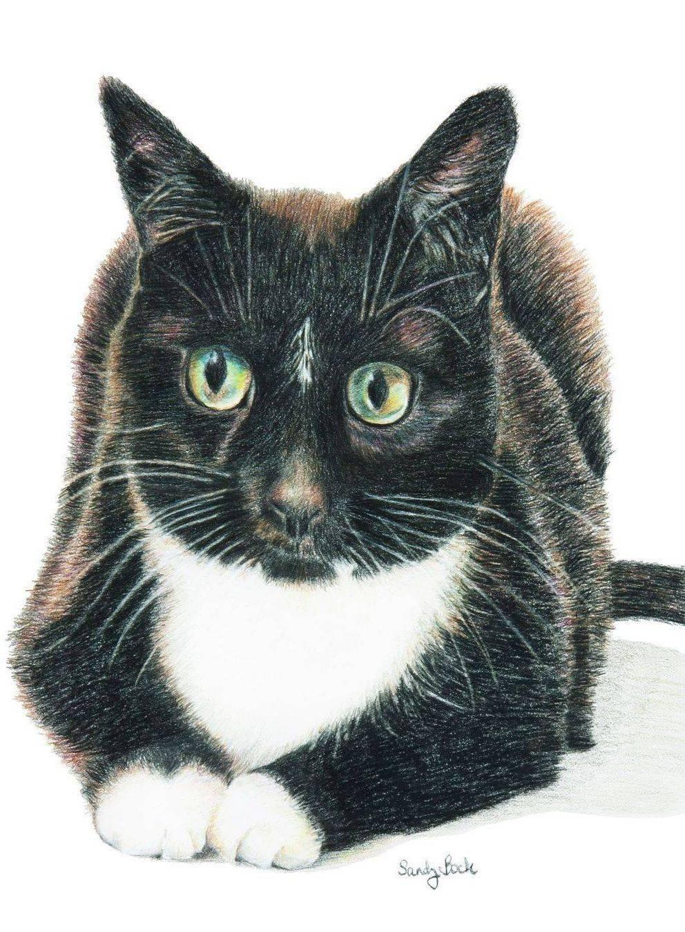 cat, cat portrait, pet, pet portrait, art, sandy bock
