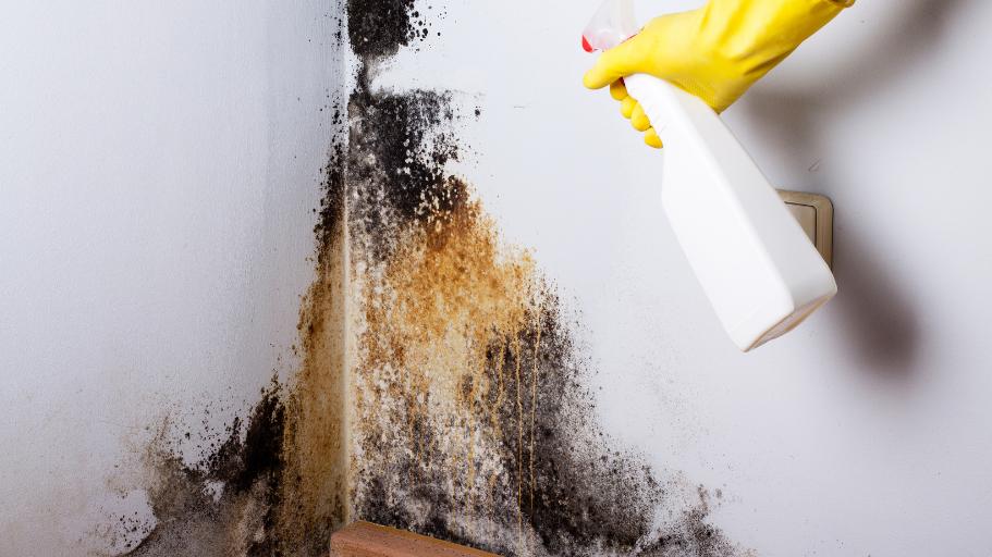 mold removal san francisco