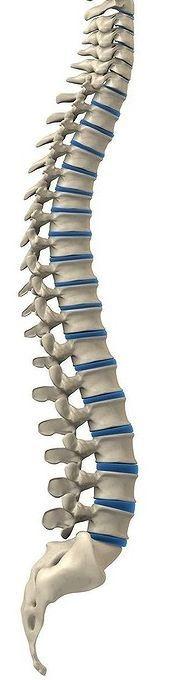 Osteopath Kensington