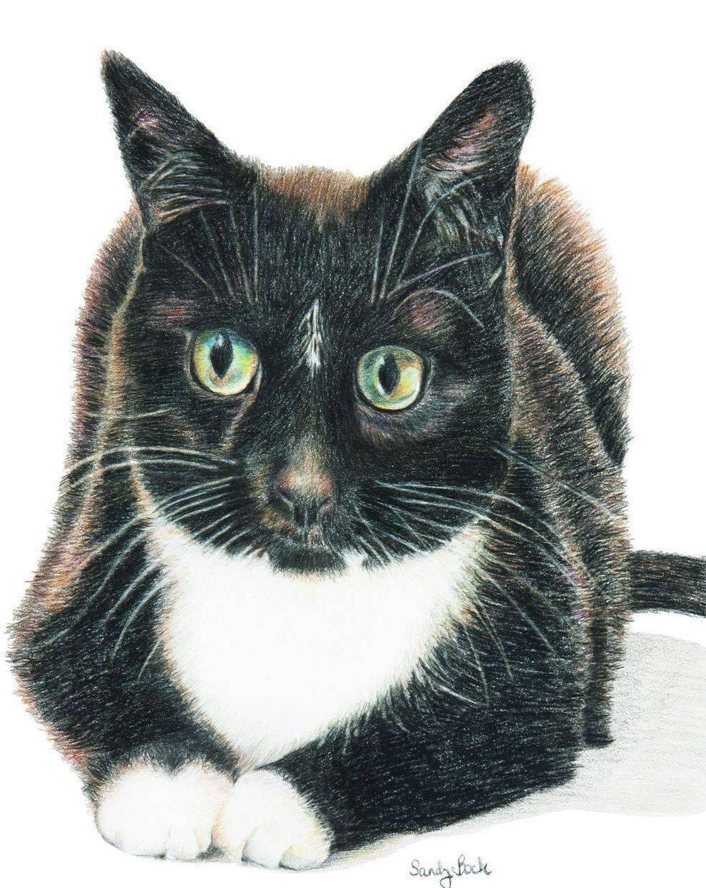 pet portrait, cat portrait, cat portrait