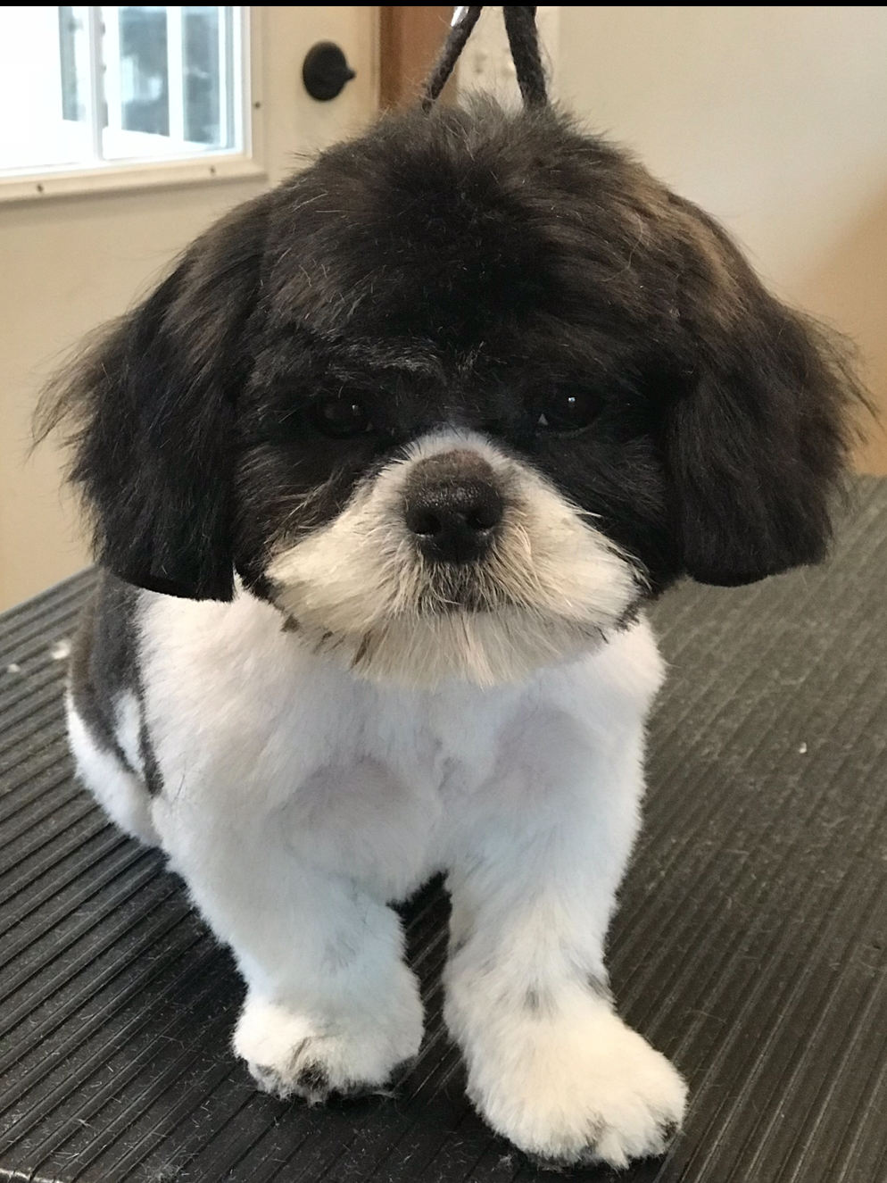 Mobile dog grooming, mobile Cat Grooming, St. Augustine Florida, 32092, Pet Salon, Grooming, Curbside, Mobile Grooming, Dog and Cat Grooming, nail trimming, ear cleaning, bathing, medicated baths, anal glands expressed, flea and tick preventative,