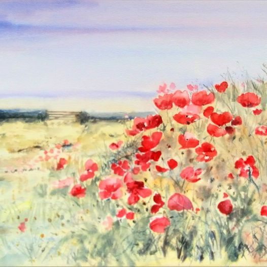 Poppy Field Watercolour townsend Poppies countyside