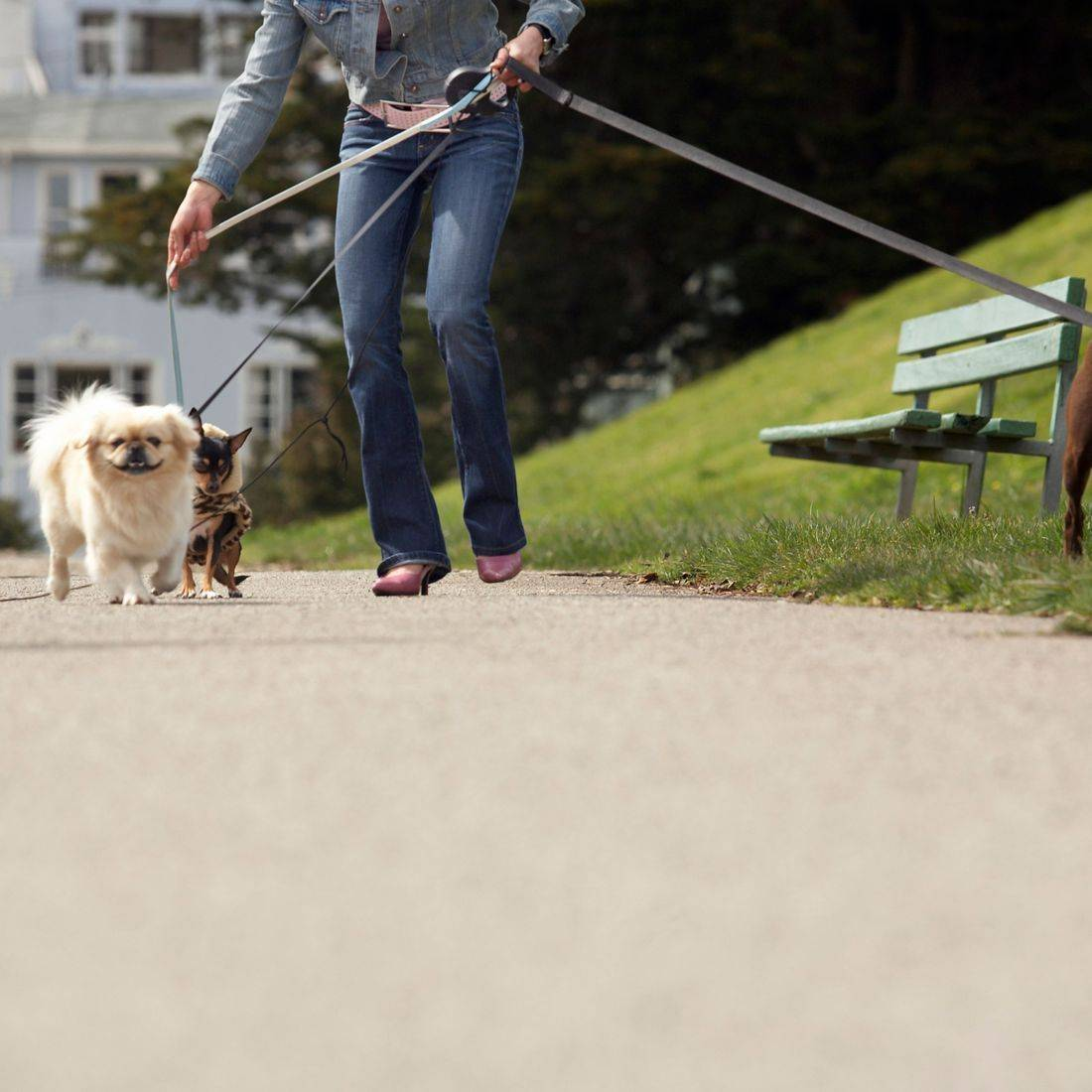 image of person walking dogs